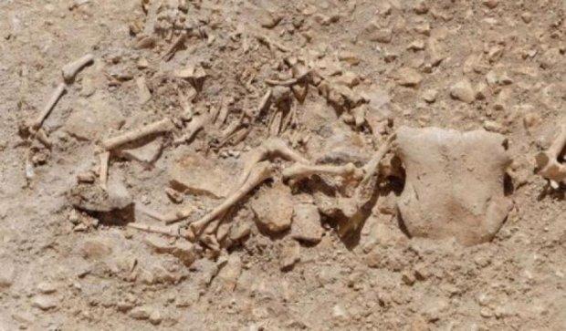 """Британские археологи нашли захоронение """"мифических"""" животных"""