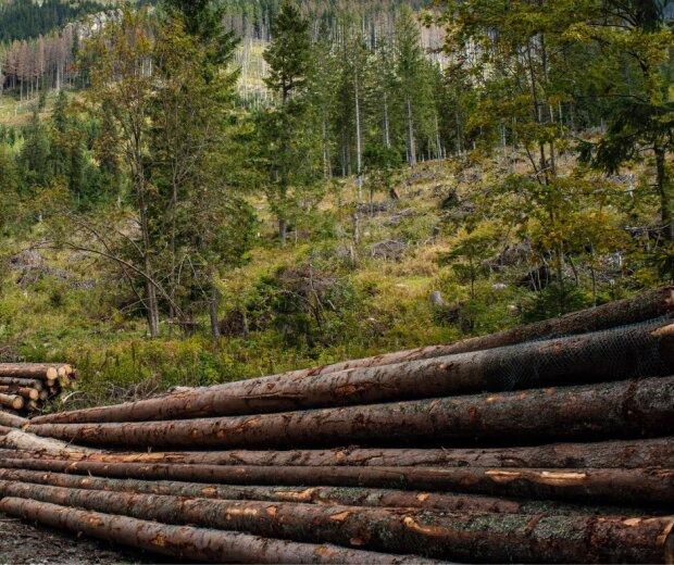 вирубка лісу на Івано-Франківщині