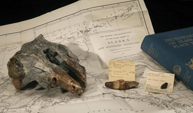 Учені знайшли череп найдавнішого дельфіна