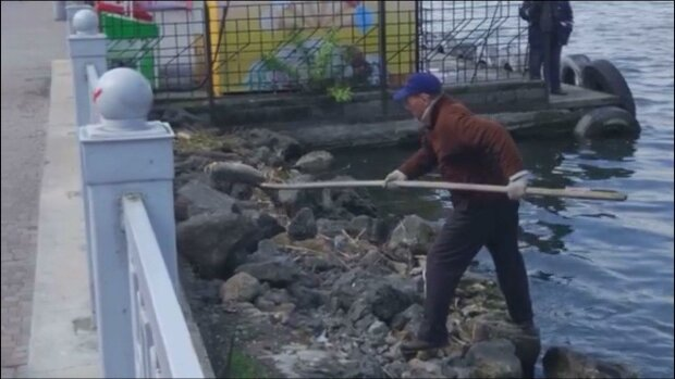 В Тернополе берег пруда завален сотнями трупов - очевидцы засняли кошмар на видео