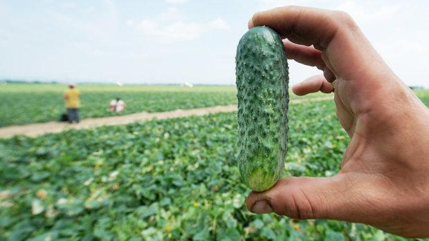 Ціни на овочі влітку: коли чекати на здешевшання здорового харчування