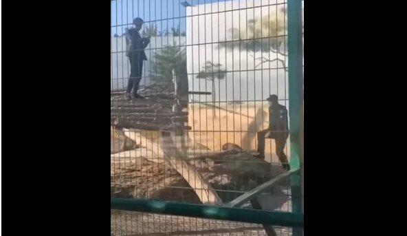 Інцидент в біопарку Одеси, скріншот з відео