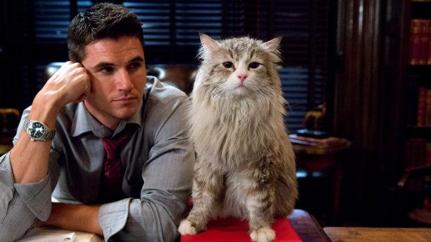 Усі коти заздрять: топ знаків Зодіаку, які мають сім життів