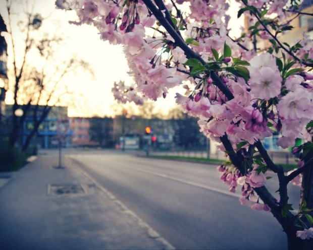 Погода на 16 мая: Украину ожидает синоптическая благодать