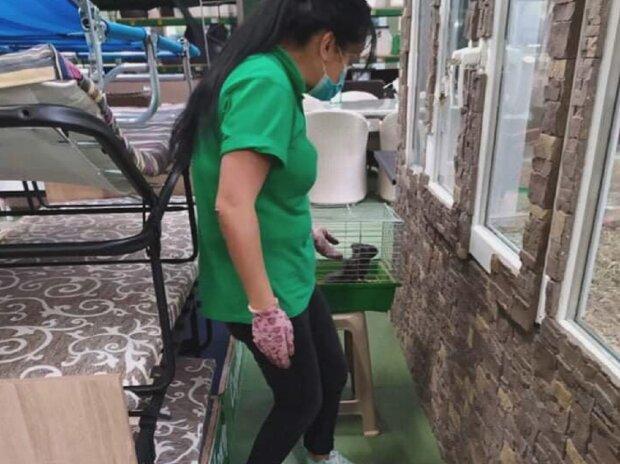 В одному з гіпермаркетів Франківська знайшли поранених тварин, фото: Facebook UAnimals