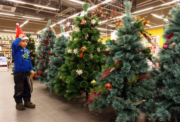 Выбираем новогоднюю елку: какие деревья в тренде и как не навредить природе