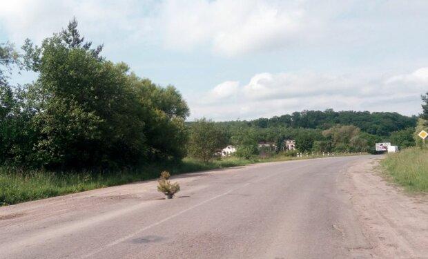 На Тернопольщине ель посадили посреди убитой дороги - позор чиновникам