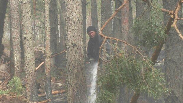 Лесной пожар, фото ГСЧС