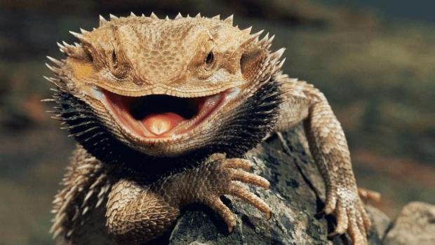 Чоловік вирішив нагодувати ящірку, але перетворив будинок на справжнє пекло: в житті кішок це був найщасливіший день