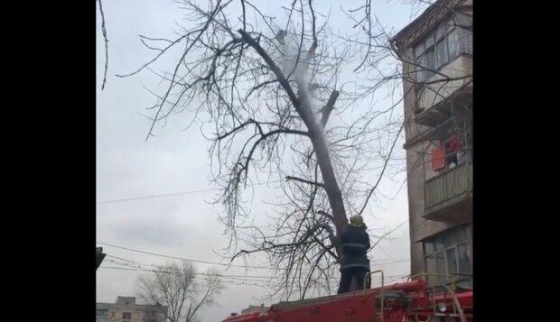 У місті Зеленського перелякану кішку збили з дерева струменем води
