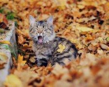 Котик восени, 2Крота
