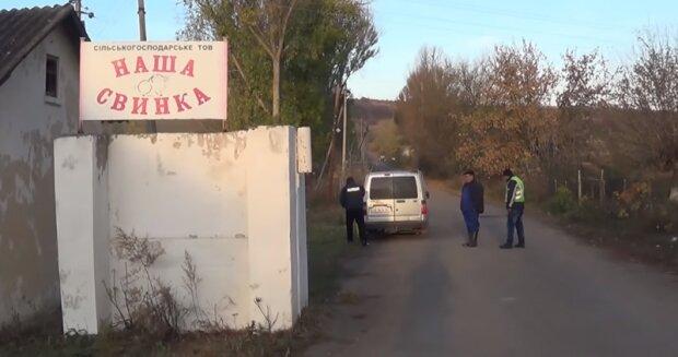 Буковину атаковала чума, очень страшно - медики разрываются