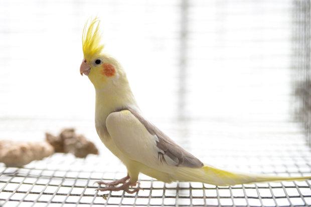 Папуга-істеричка закотив скандал шматочку деревної кори
