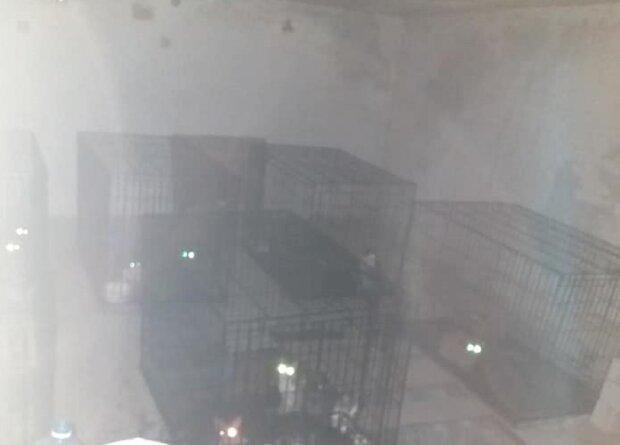 Під Львовом шкуродер запхав котів у клітки і сховав у гараж - жалібно нявкали і кликали на допомогу