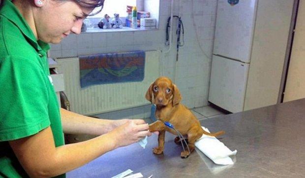 25 кумедних переваг у роботі ветеринара (фото)