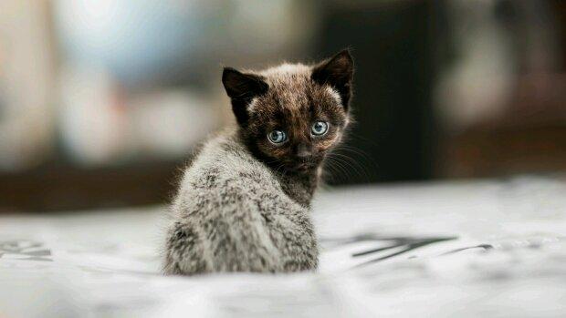 котенок, pxhere