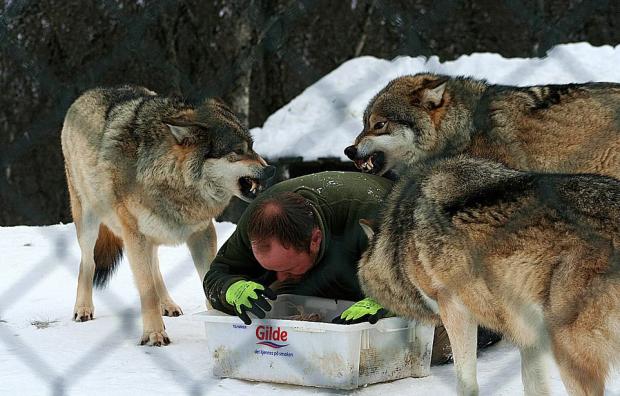 Бегущий с волками: история норвежца, ставшего настоящим альфа-самцом