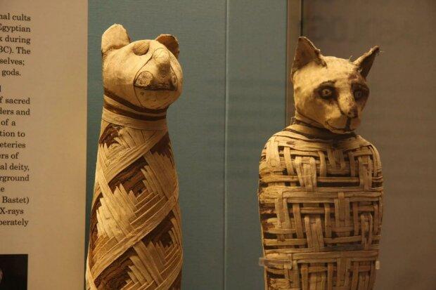 Ученые заглянули внутрь древней мумии, увиденное поразит каждого: 3 хвоста и 5 лап