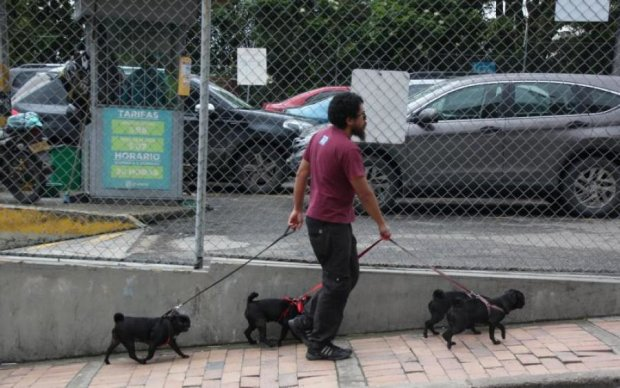 Собака показала людям усю людяність: відео
