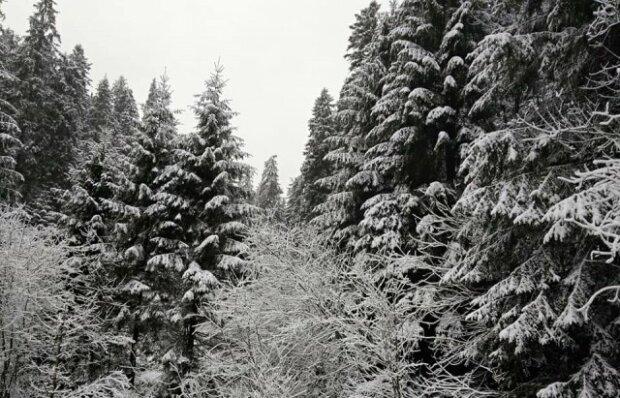 Заснеженный лес / фото: Марьяна Мисик