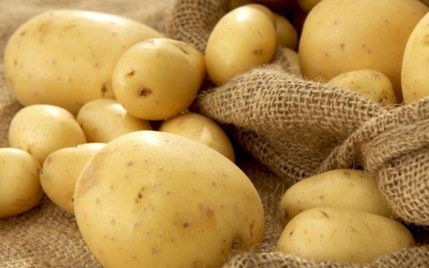 Стало известно, сколько будет стоить картофель осенью