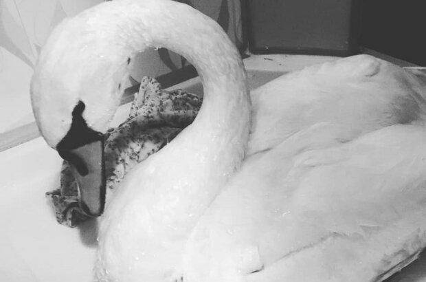 """На Запорожье горе-охотники открыли сезон случайных жертв - """"От пуль скончались лебедь и сова..."""""""