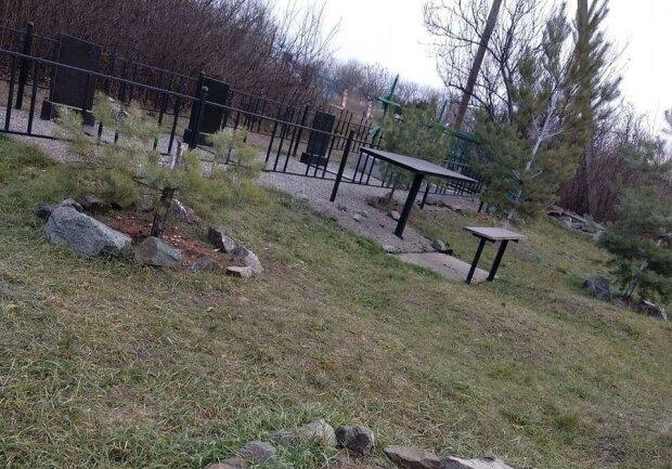 """Під Дніпром """"чорні"""" лісоруби вкрали ялинки у небіжчиків: """"Нічого святого"""""""