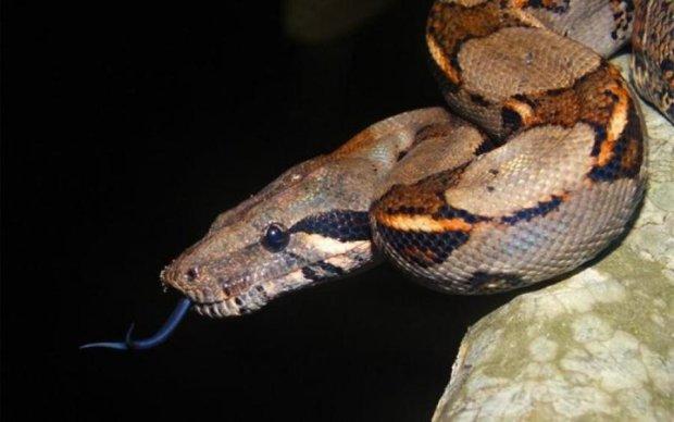 Змії вразили тактикою полювання