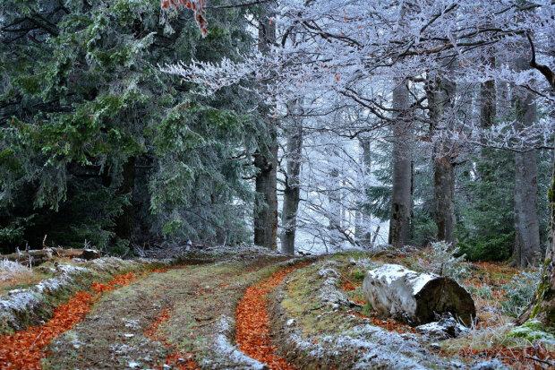 В Днепр идут морозы: синоптики предупредили о резком похолодании 21 ноября