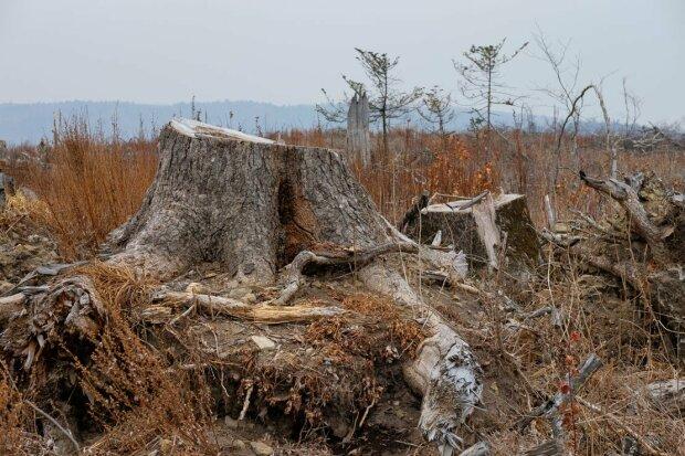 Під Вінницею лісника розчавило дерево: нещасного довелося збирали по частинах