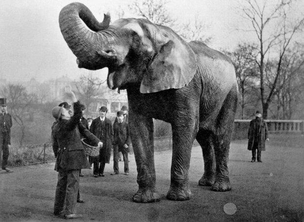 За что изобретатель Томас Эдисон казнил слониху Топси