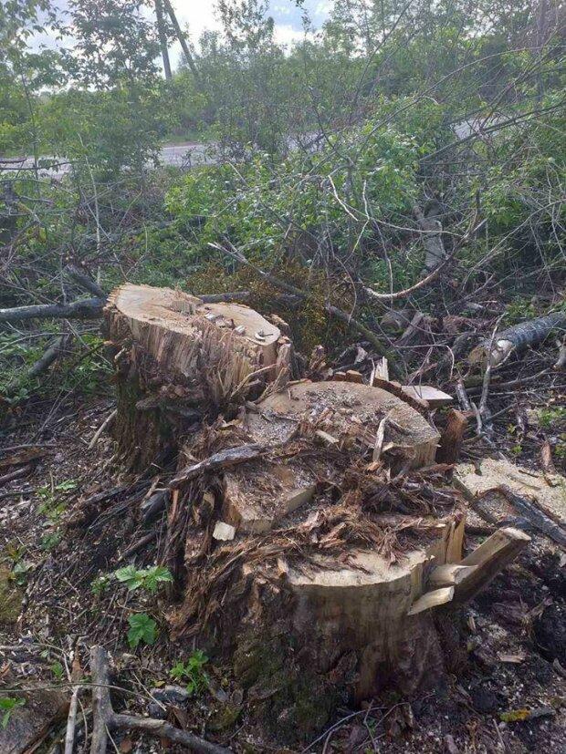 Чорні лісоруби, вирубка лісів \\ фото ДЕІ України у Фейсбук