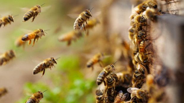 Харків заполонили бджоли-вбивці: жертви вже є