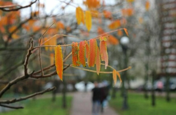 Погода осенью, фото: Unian