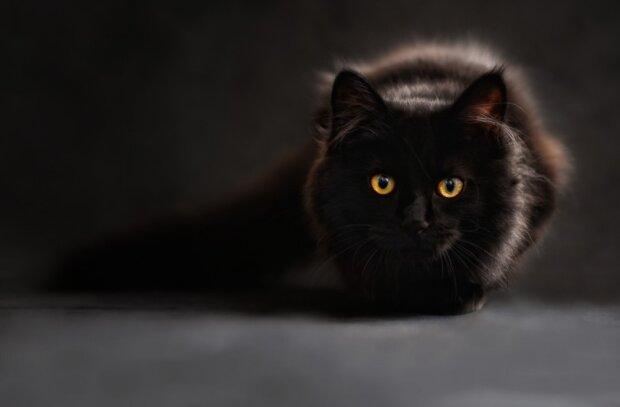 Кот, фото pxhere