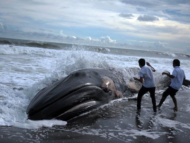 Щось жахливе коїться у Тихому океані: всього за місяць на пляжі Сан-Франциско викинуло чотирьох мертвих китів