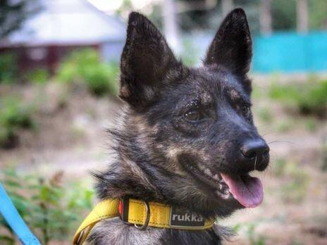 відважний пес Джессі боронив українських моряків