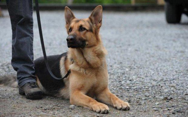 Службовий пес врятував життя десяткам українців