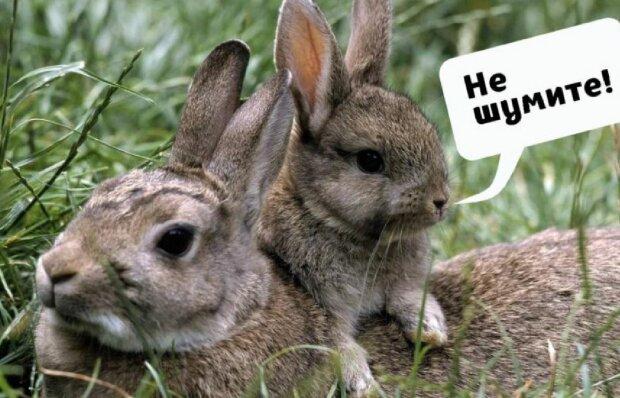 Кролики, фото: sobitie.com.ua