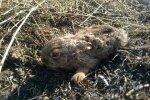 обожженный зайчик, фото ГСЧС
