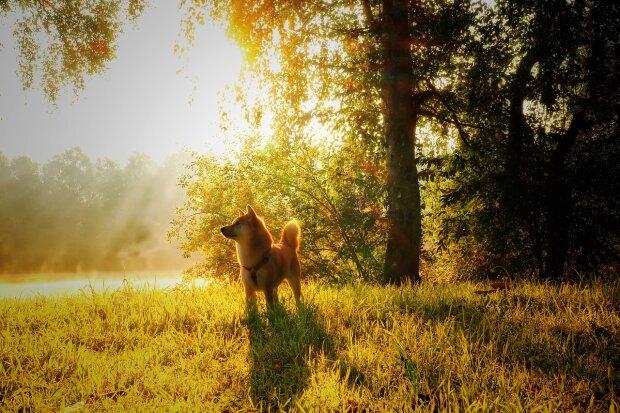 Бабине літо, на старт: синоптики обіцяють львів'янам райський день 23 жовтня