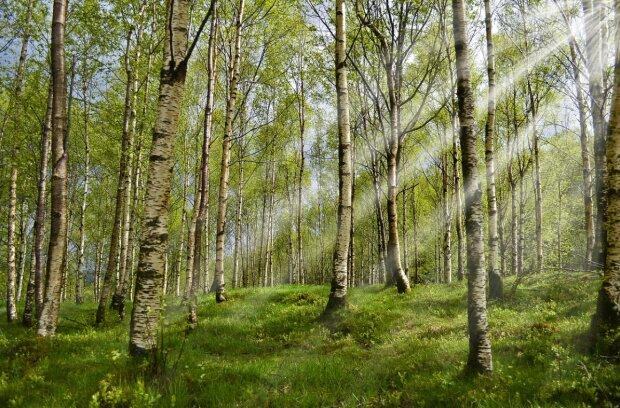 Клещ в лесу, фото pixabay