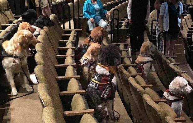 Собачки на театральном фестивале, фото: Stratford Festival