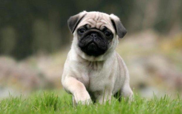 Небезпечно: ветеринари благають не заводити ці породи собак
