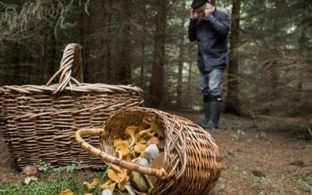 Сезон открыт: 4 способа отличить ядовитые грибы от съедобных