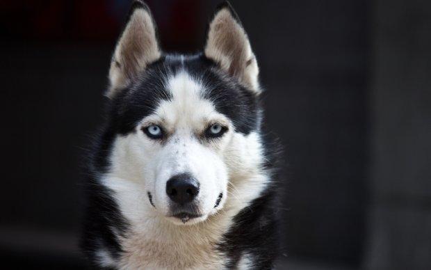 Самый недовольный пес в мире по имени Ануки излечил хозяйку от тяжелой болезни: сейчас я снова учусь и готовлюсь осваивать профессию ветеринара