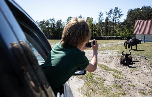 дитина в машині, фото Gettyimages