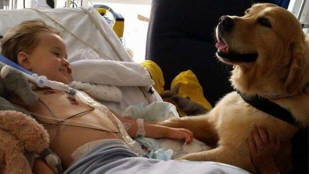 Собака-чудотворец, фото Lyndsey Uglow