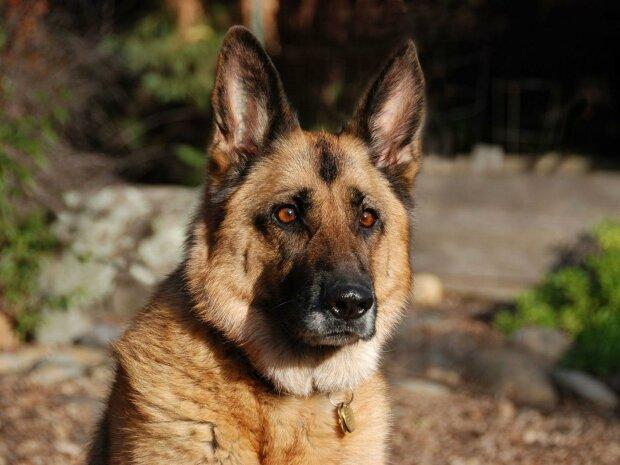 Выброшенный на улицу пес нашел работу в Нацгвардии