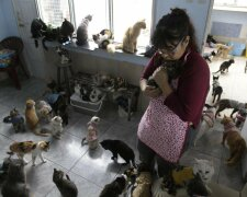 Коты в квартире во Львове фото: То є Львів
